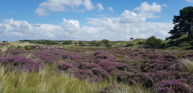 Terschelling Heide