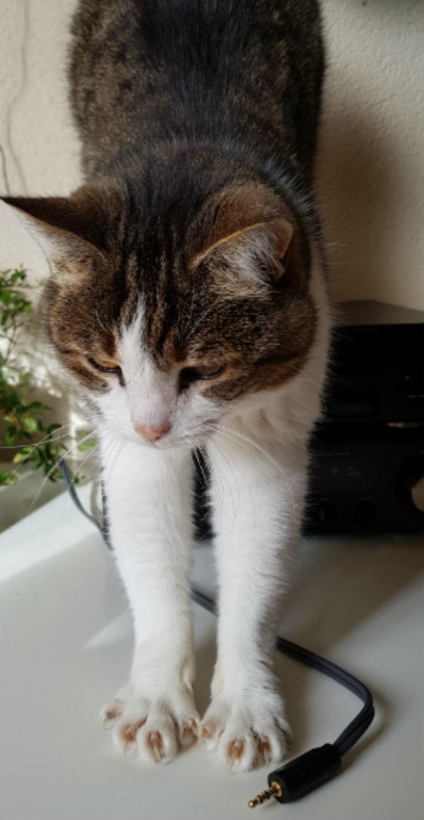 Katten Mientje