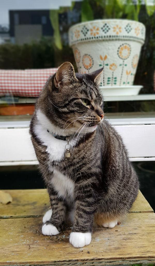 Katten Tygo
