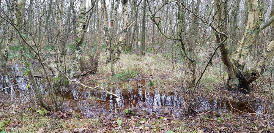 Terschelling Poel in het bos