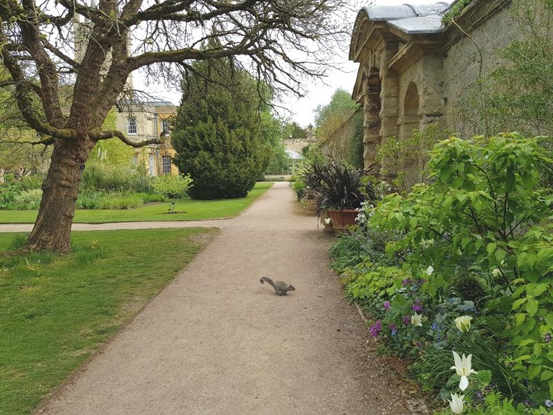 Botanic Garden Oxford Eekhoorn