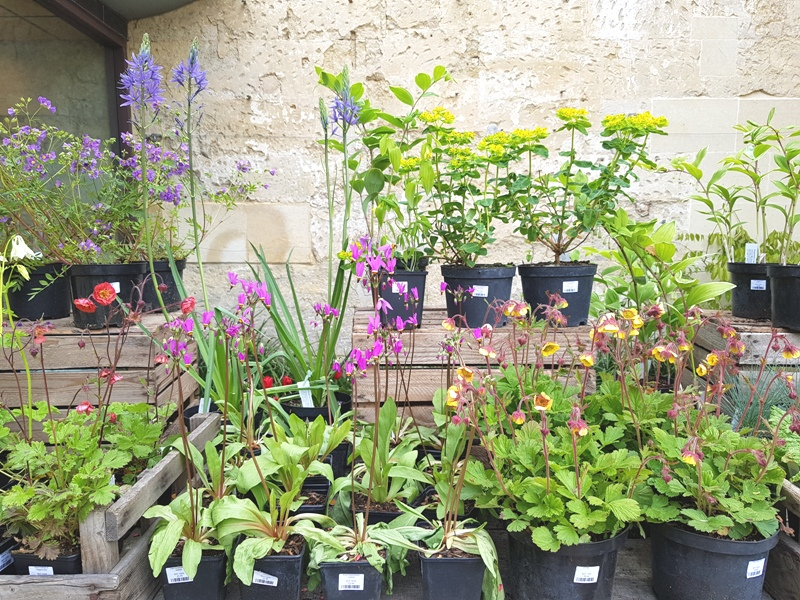 University of Oxford Botanic Garden Plants