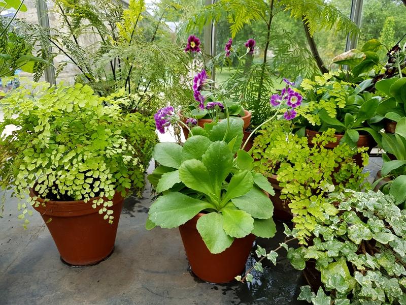 Botanic Garden University of Oxford