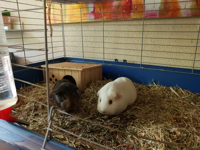 Dagboek World of Bliss Cavia's