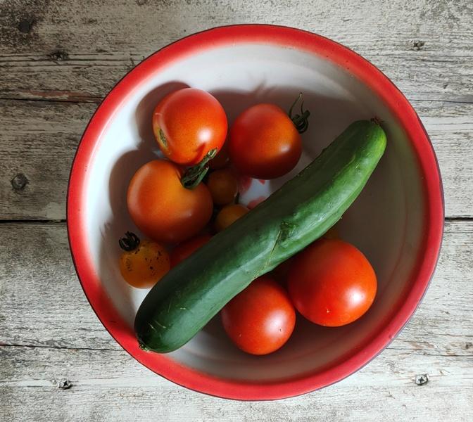 Dagboek Biologische groente