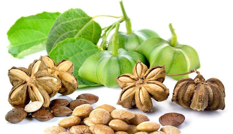 Sasha Inci Nuts